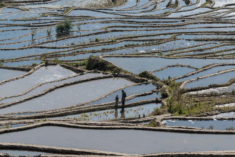Man-and-boy-walking-on-the-Niujiaozhai-Rice-Terraces,-Yunnan-Province,-China