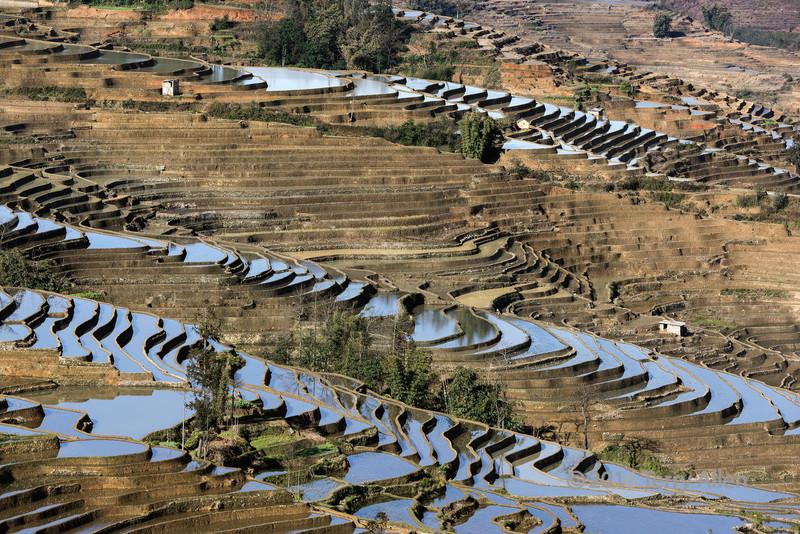 Early-morning-rice-terraces,-Duoyishi,-Yunnan-Province,-China