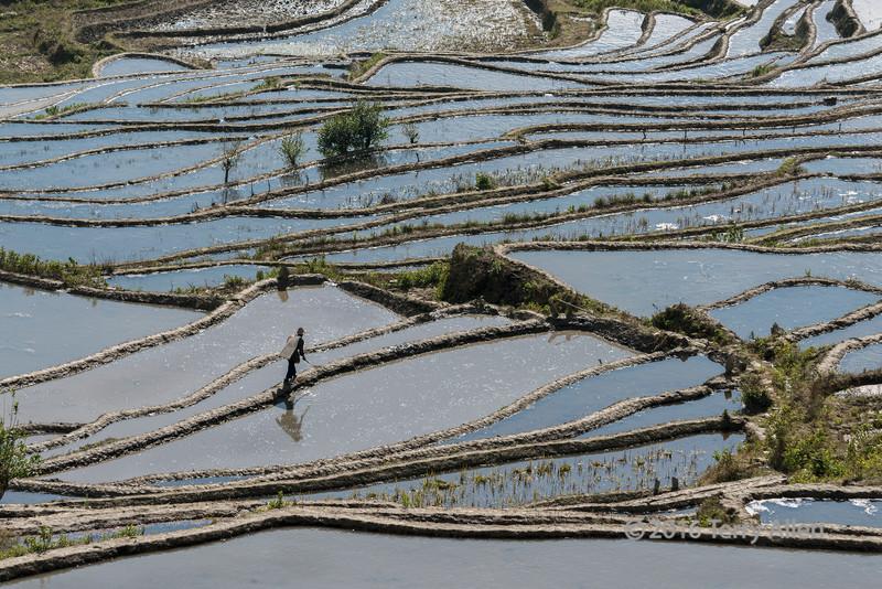 Man tending the rice terraces