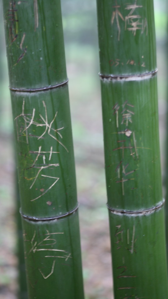 Graffiti, Bamboo Forest, Hangzhou, China