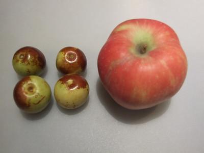 une pomme et des dattes fraîches (mela e datteri freschi)