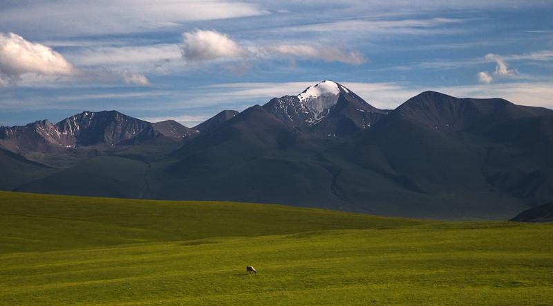 Naraty Grasslands XinJiang China (63502725)