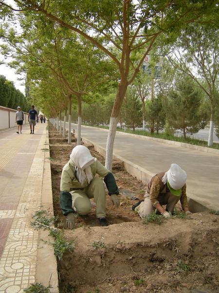 Mingshashan 0509 (45)