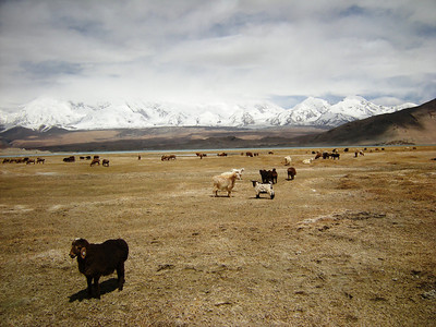 Mount Muztagata 0509 (3)