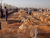 Sheep market in Kashgar