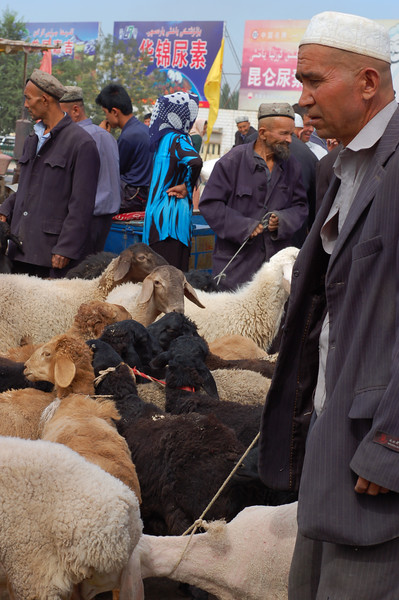 Sheep and sellers arrive at the market