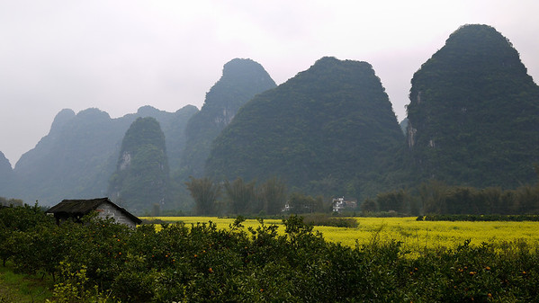 A small wooden house, the karst rocks, and prettily flowing fields of flowers outside of Yangshuo, China.