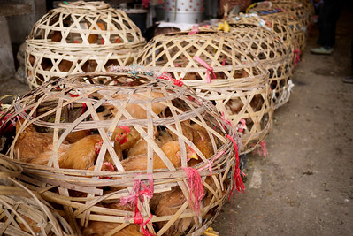Chickens in cages are ready to be bought and sold for dinner at the Fuli Market near Yangshuo, China.