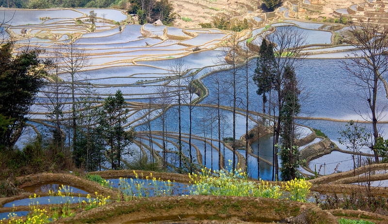 Yuan Yang Terraced Fields, Yunnan