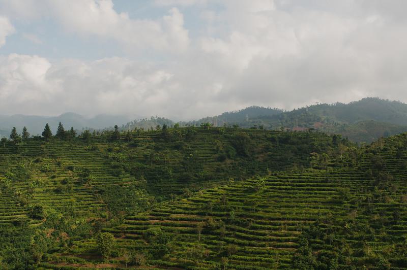 We crossed many tea plantations along the road