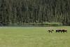 普达措公园