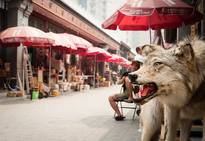 A stuffed wolf at Panjiayuan market, Beijing, China