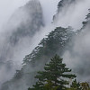 Trees in the mist at Huangshan, China