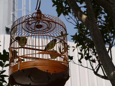China: Bird Park