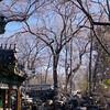 Beijing_2012 01_4492670