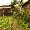 Fu Yung_2011 12_4491816