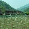 Longjitian_2011 04 26_4490614