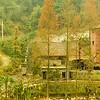Zhangjiajie_2011 12_4492260