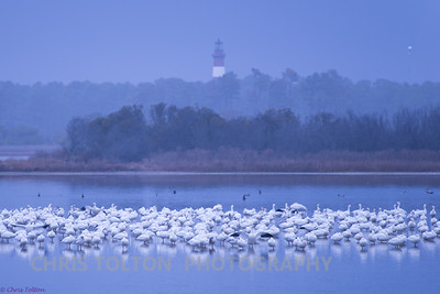 Snow Geese & Lighthouse
