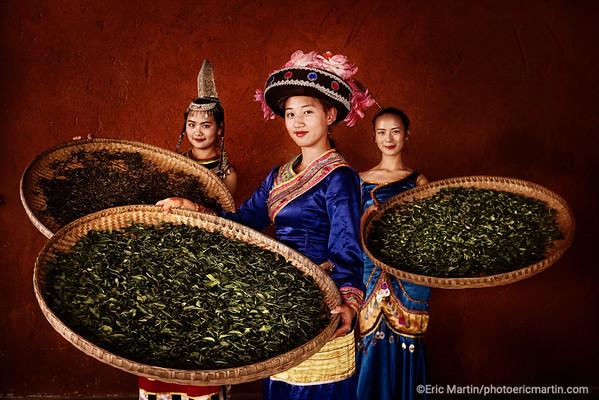 CHINE. ROUTE DU THÉ. YUNNAN.  Plantation de thé Puer de l Hotel Bolian Resort & Spa Relais & Chateaux. Des jeunes filles en tenues traditionnelles des ethnies des montagnes du Yunnan présentent la récolte de thé d'automne sur des claies de séchage