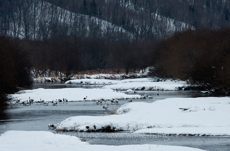 From Otowabashi in early morning, Kushiro, Hokkaido