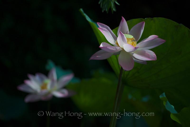 July 5, 2015 in Honghu Park, Shenzhen