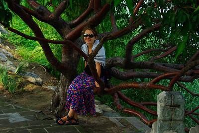 Marta na drzewie