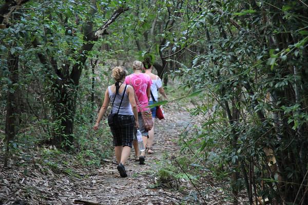 W drodze na moon hill w lasku bambusowym