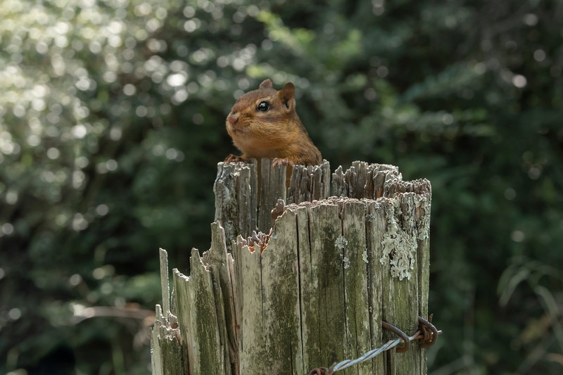 Fence Post Perch