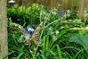 Garden Stroll-4796