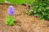 Garden Stroll-4762