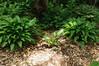 Garden Stroll-4872
