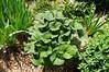 Garden Stroll-4861