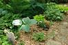 Garden Stroll-4877