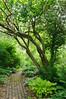 Garden Stroll-4862