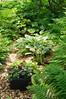 Garden Stroll-4875