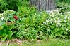 Garden Stroll-4883