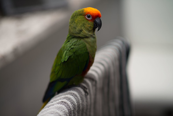 Wasabi is a very relaxed and beautiful bird!