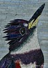Belted Kingfisher -- inspired by a photo by Cherry Hudson