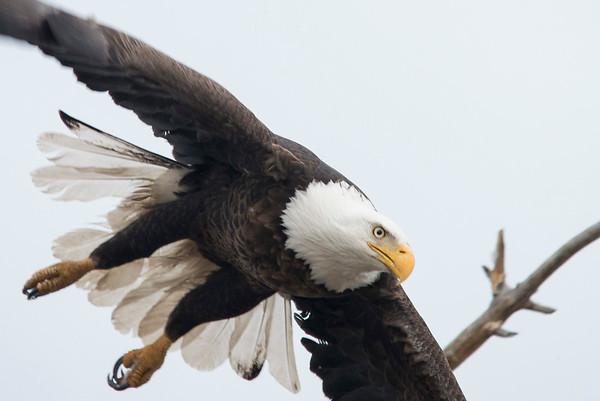 American Eagle, Colorado