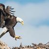 American Eagle, Florida