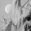 Moon at Wakulla State Park, Florida