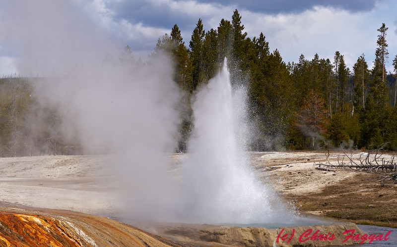 Geyser from Yellowstone.
