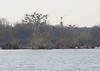 Nesting island lock 4 park Gallatin TN