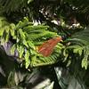 Butterflies - 7