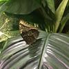 Butterflies - 6