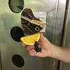 Butterflies - 1