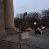Dinosaur topiary - 1