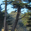 Trees on the way to the Cliff House