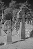 Elmwood Cemetery 024